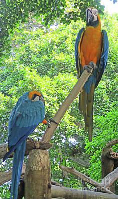 Photograph - Tropical Bird 3 by Randall Weidner