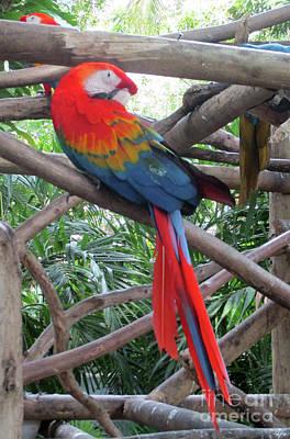Photograph - Tropical Bird 4 by Randall Weidner