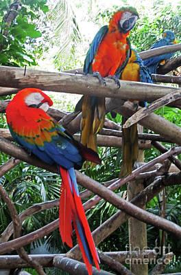 Photograph - Tropical Bird 5 by Randall Weidner
