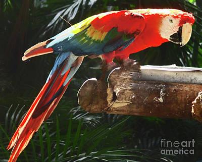 Photograph - Tropical Bird 6 by Randall Weidner
