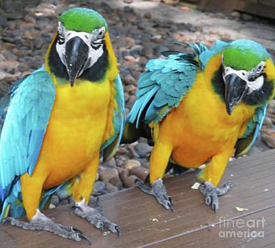 Photograph - Tropical Bird 7 by Randall Weidner