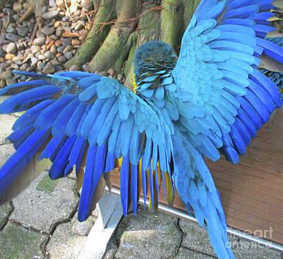 Photograph - Tropical Bird 8 by Randall Weidner