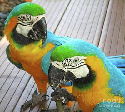 Photograph - Tropical Bird 9 by Randall Weidner