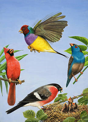 Feeding Young Painting - Tropical Birds by RB Davis
