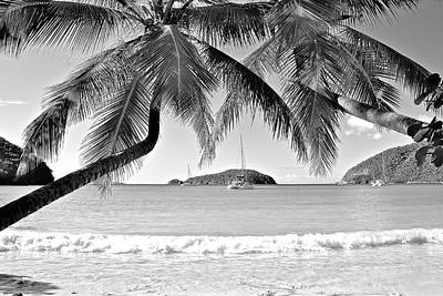 Photograph - Tropical Black And White by Frozen in Time Fine Art Photography