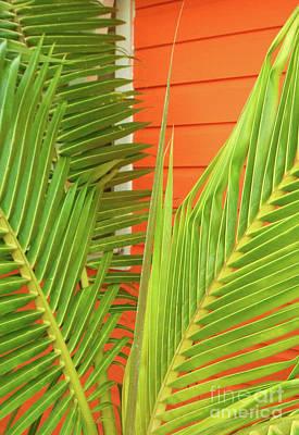 Beach Theme Decorating Photograph - Tropical Bliss by Mary Ann Tardif