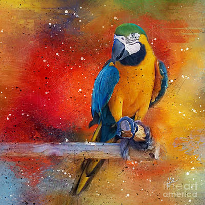 Photograph - Tropical Blue And Yellow Macaw 1 by TK Goforth