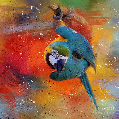 Photograph - Tropical Blue And Yellow Macaw 3 by TK Goforth