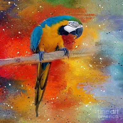 Photograph - Tropical Blue And Yellow Macaw 4 by TK Goforth