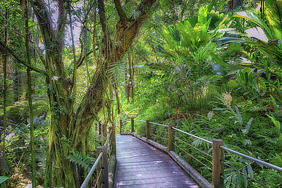 Photograph - Tropical Boardwalk by Susan Rissi Tregoning