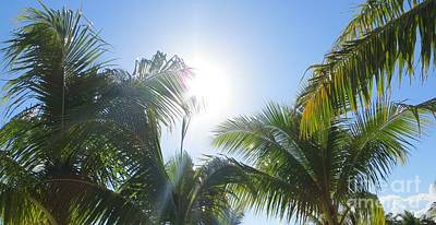 Photograph - Tropical Breeze by Tim Townsend