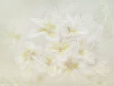 Photograph - Tropical Breeze by Wallaroo Images