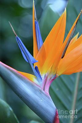 Photograph - Tropical Brilliance by Cindy Manero