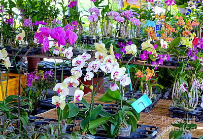 Photograph - Tropical Butterfly Orchids For Sale by Yali Shi