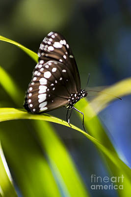 Butterflys Photograph - Tropical Butterfly by Jorgo Photography - Wall Art Gallery
