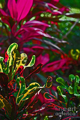 Bicycle Patents - Tropical Crotons and Ti Plant by Barbara Knowles
