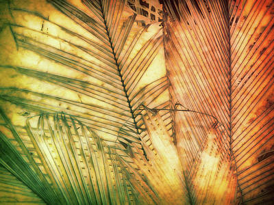 Photograph - Tropical Dream by Ann Powell