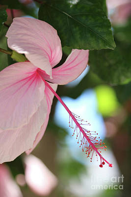 Photograph - Tropical Dream by Carol Groenen