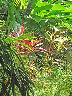Photograph - Tropical Dreams by Ian  MacDonald