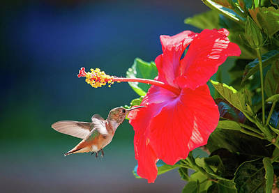 Photograph - Tropical Duo In The Garden by Lynn Bauer