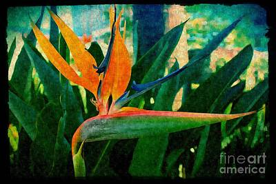 Photograph - Tropical Eden by Jenny Revitz Soper
