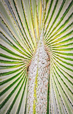 Photograph - Tropical Fan Palm by Gary Slawsky