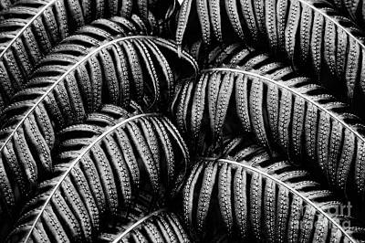 Photograph - Tropical Fern Black White by Jan Brons