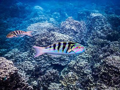 Tropical Fish Bay Print by Michael Scott
