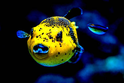 Animals Photograph - Tropical Fish by Jijo George