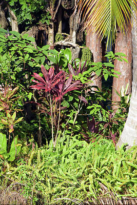 Photograph - Tropical Flora by William Tasker