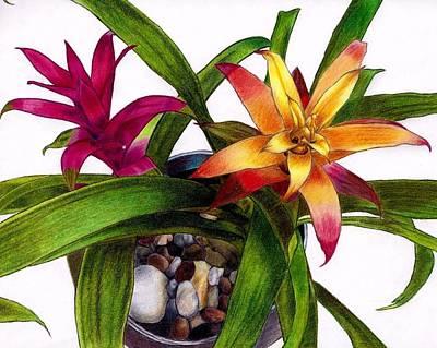 Bromeliad Drawing - Bromeliads Indoor Flower by Agnieszka Walhof