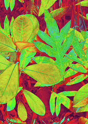 Digital Art - Tropical Foliage 1 by Kerri Ligatich