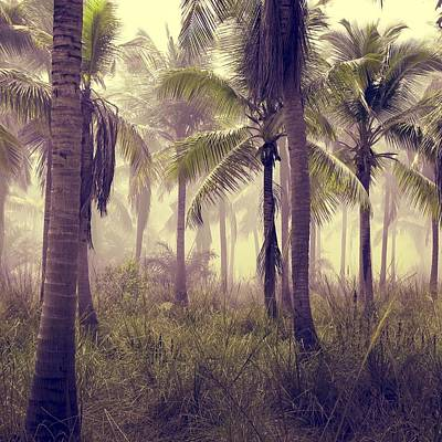 Photograph - Tropical Forest by Marianna Mills