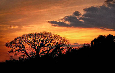 Photograph - Tropical Forest Sunset by Carolyn Derstine