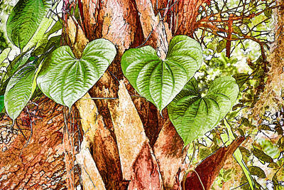 Photograph - Tropical Forest Vine by Richard Goldman