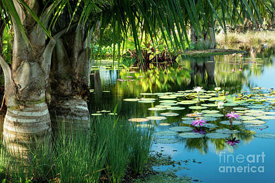 Photograph - Tropical Garden Pond by Brian Jannsen