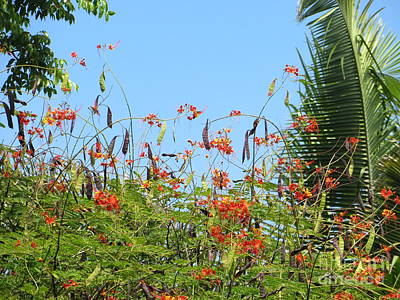 Photograph - Tropical Garden by Tim Townsend