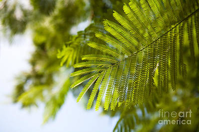 Photograph - Tropical Green Leaf by Kaitlyn Suter