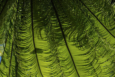 Photograph - Tropical Green Rhythms - Feathery Fern Fronds - Horizontal View Down Right by Georgia Mizuleva