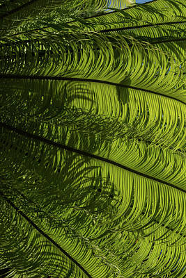 Photograph - Tropical Green Rhythms - Feathery Fern Fronds - Right Vertical View by Georgia Mizuleva
