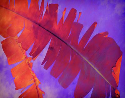 Photograph - Tropical Heat by Ann Powell