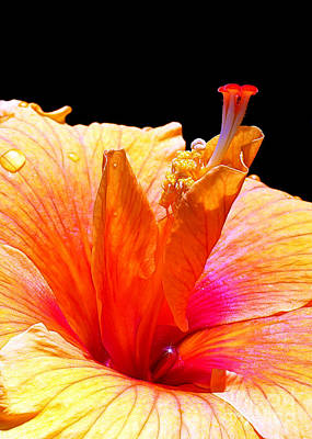 Photograph - Tropical Heat Wave by Judi Bagwell