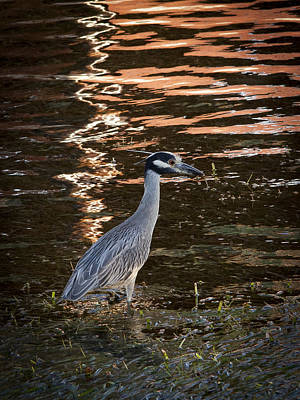 Photograph - Tropical Heron by Jean Noren