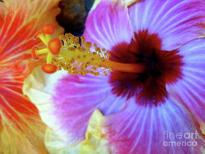Photograph - Tropical Hibiscus by Jenny Lee