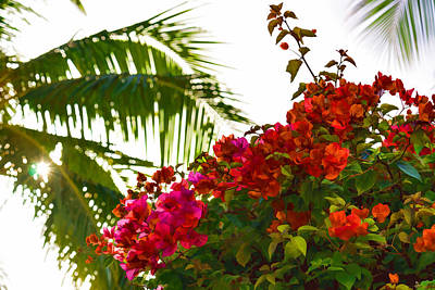 Painting - Tropical Impressions - Bougainvilleas And Palm Fronds In The Sky by Georgia Mizuleva