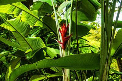 Digital Art - Tropical Impressions - Red Ginger Flower Framed In Lush Jungle Green by Georgia Mizuleva
