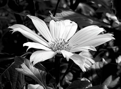 Photograph - Tropical In Monochrome by Robert Meyers-Lussier
