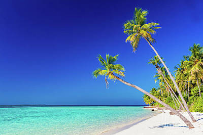 Hot Photograph - Tropical Island With Coconut Palm Trees On Sandy Beach. Maldives by Michal Bednarek