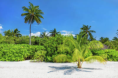 Empty Photograph - Tropical Island With Sandy Beach In Maldives by Michal Bednarek