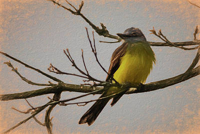 Photograph - Tropical Kingbird Parque Del Cafe Colombia Art Rendering by Adam Rainoff